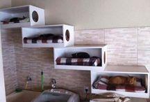 shelf for cats