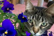 Cat Safe Plants / What to grow in your garden to keep kitty safe. There are many non-toxic varieties for both you and your cat to enjoy.