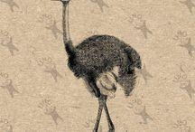 Vintage clipart - Birds