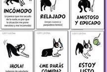 Mascotas!!