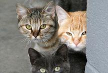Okay Kitties too / by Wanda Barcus