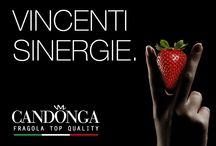 Vincenti Sinergie / Nasce il Club Candonga dedicato alla fragola simbolo dell'agricoltura del Metapontino.