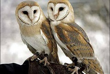 Owls & wild life / by Theresa Meloon