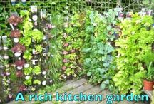 gardening veg and herbs