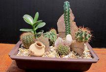 Kaktus garden