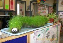 plante ormentale experiment