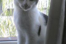 Lennon My Cat
