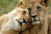 Lionlove♡