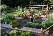 Vegetable garden / by VillaHottentotti Blog
