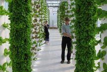Verticle Gardening / by Jennifer Baker