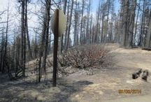 Forest fire and recovery