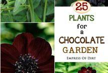Black Garden / black flowers, black foliage, garden design, gardening, black plants
