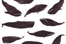 Baleines <3