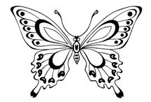 motýle