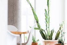 Indoor plant dèco