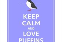 Puffins <3
