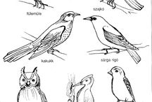 Énekes madarak