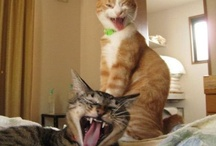 Photos That Make Us Laugh