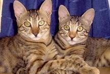 Meine Katzen / Jynx, Sookie, Filou und Luna! :)