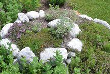 Puutarha Espanjaksi / Minun pikku puutarha mitä voi hoitta nyt kun Fibromyalgia otti loma.