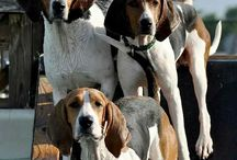 Coonhound babies / Love these dogs!