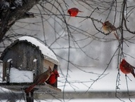 Birds / by Lori Kessler