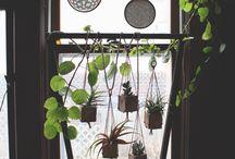 hanging green giardino verticale