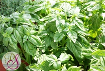 Fresh Herbs / by Debbie Petras