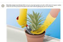 Plante ideer