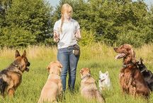 Amazing Dog Training Tips & Secrets / The best dog training tips and secrets, products and much more.