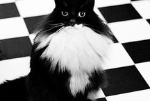 Black and White Cats / Black and White always beautiful
