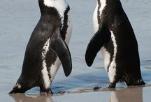 Sea Life Animals / Sharing the Sea Life Animals