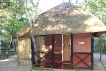 Miombo Safari Camp - Hwange / This safari camp is nestled in lush Miombo woodland bordering Hwange National Park with our own waterhole. Tents and Treehouses are elevated and overlook the waterhole which is often frequented by elephant, buffalo, kudu, warthog, bush buck, wonderful birds and different species of wildlife.