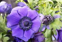 Flowers by the bunch (inspiration pics) / Inspiration pics, and pics of cool flowers I found at the wholesaler