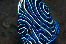 Zoutwater Vissen