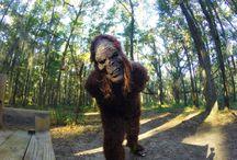 bigfoot runner / by Dan Hernandez