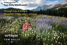 Wildflowers at Artique / Throughout July, 2016, photographer Tom Kelly will be displaying his wildflower work at the Artique gallery in Kamas, just 15 minutes from Park City, Utah.