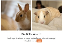 Pin It To Win It / by Hartz