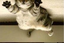 Cats, Kittens, Fluffies