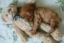 Cute puppy / Adorable