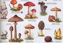 champignons enfants