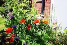 My Garden / by Sara Venn