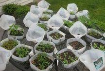 Como plantar en galones de leche en el invierno