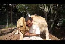 U Tube Animale Amore
