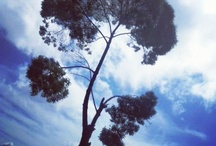 Tree is for life / Wherever I travel, it was the trees that freshen my eyes and mind