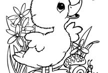 kachna