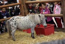 Fieracavalli 2013 / Horses - International Fair in Verona