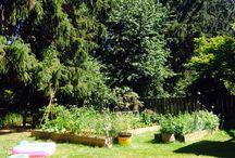 My garden 2015 / by debbie bakos