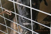 COUNTRY New South Wales POUNDS SAVE DOGS AUSTRALIA / COUNTRY POUNDS DOGS TO ADOPT RESCUE SHARE