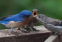 Birds / Birds collection